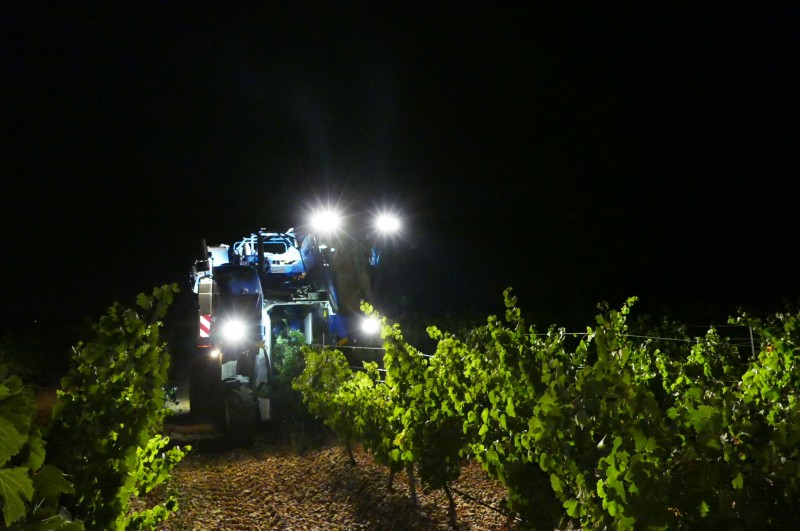 D.O. RUEDA HARVESTS 89,151,039 KILOS OF GRAPES