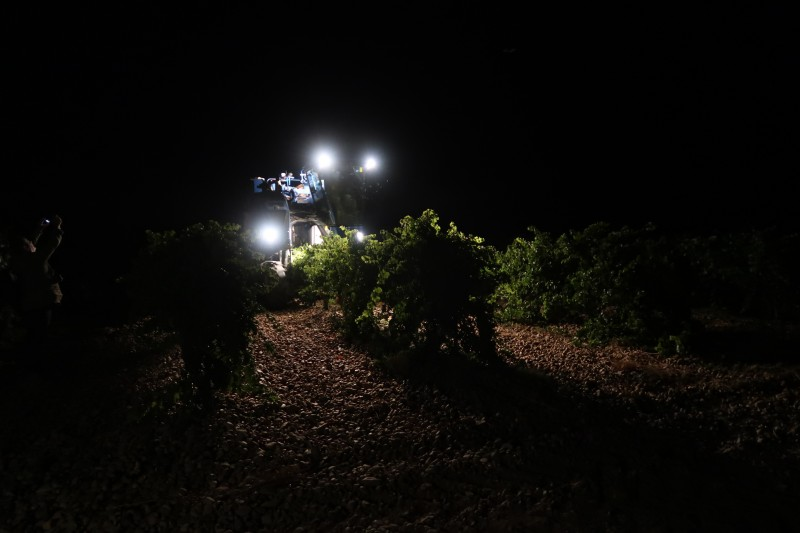 D.O. RUEDA COMPLETES THE HARVEST BY COLLECTING A TOTAL OF 83,1482,637 KILOS OF GRAPES