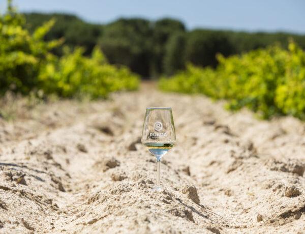 Copa Suelo Arenoso y viñedo vaso_2